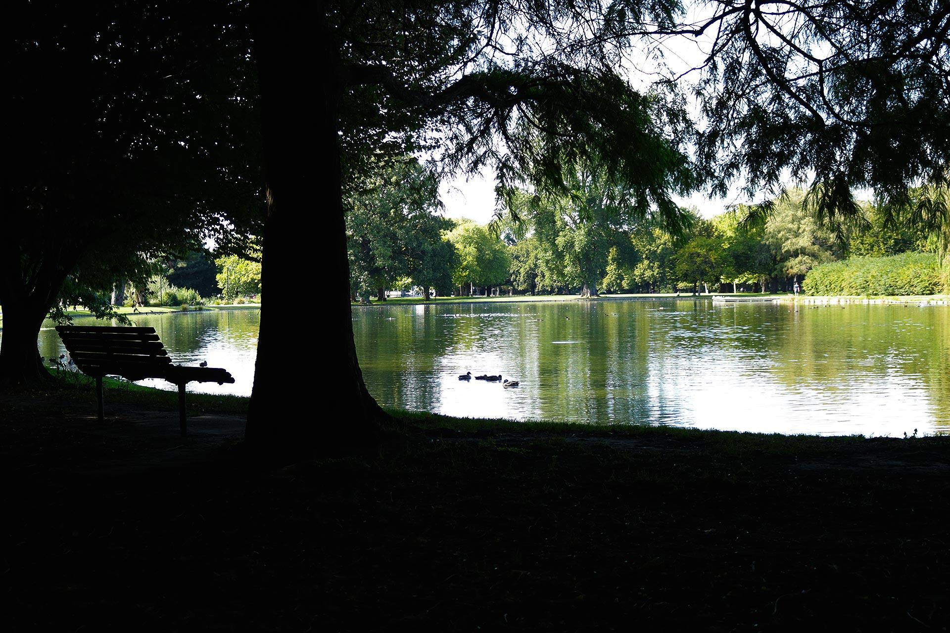 Hagley Park Tours & Riccarton Bush Tours